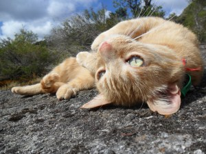 Asrai catching some rays on the granite Dec 22, 2011