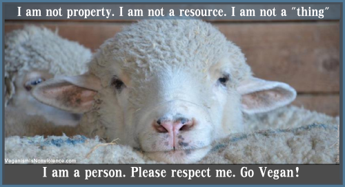 sheep I am a person