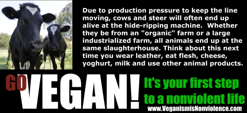 """Whether """"free range"""" """"organic"""" and factory farmed, they all go to the same slaughterhouse"""