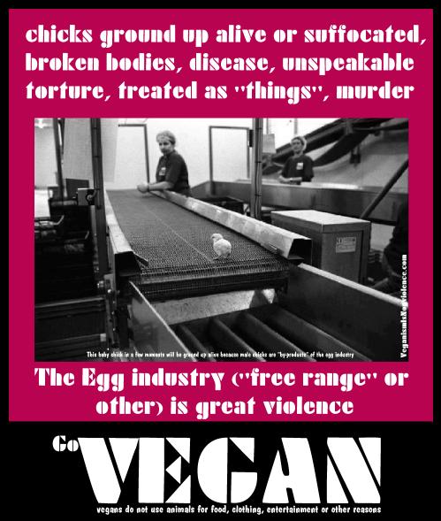 """""""free range"""" eggs"""