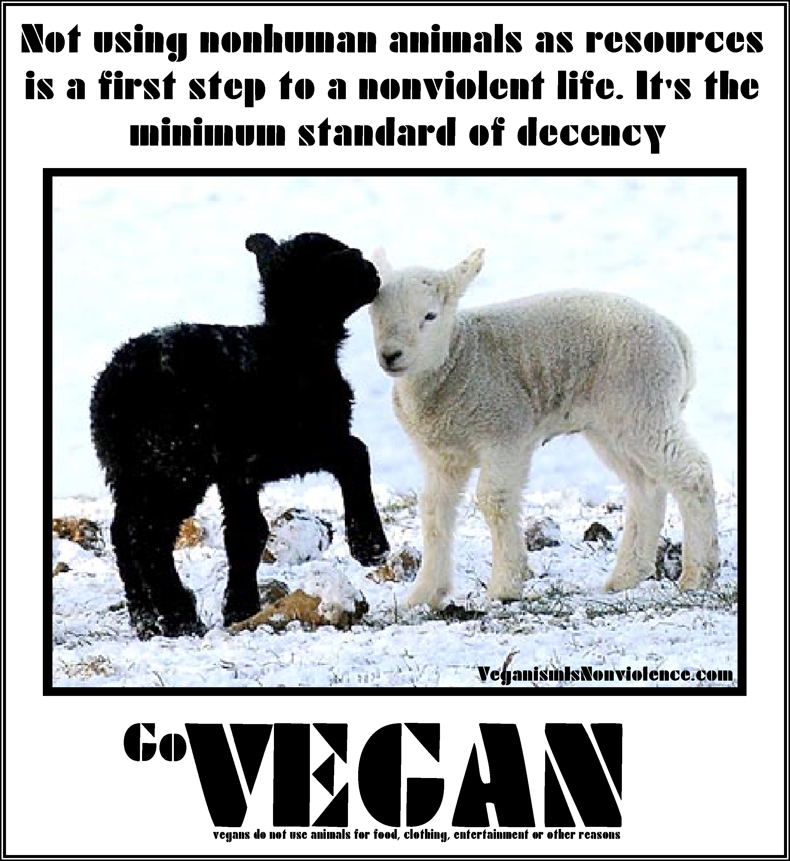 social justice veganism is nonviolence not using animals