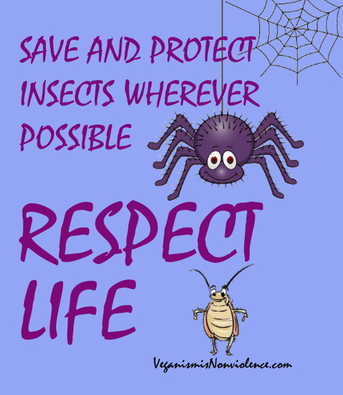 respect insects