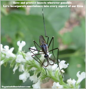 save and protect insects