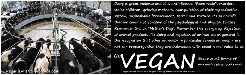 Dairy is violence