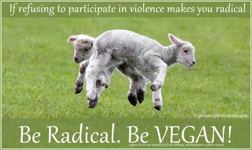 Lambs nothing radical