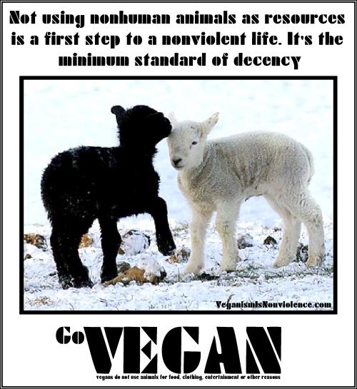 not using animals