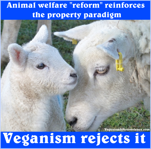 animal welfare reinforces