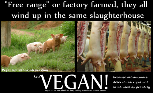 In the end same slaughterhouse