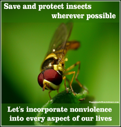 save and protect flies