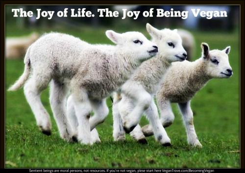 lambs go vegan VT